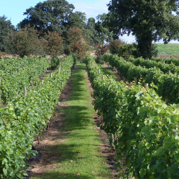 Grove Estate Vineyard | Our Story